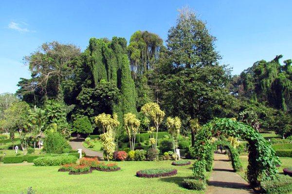 Ботанический сад в Шри-Ланке