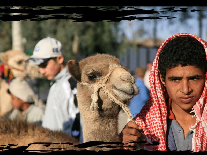Традиционное блюдо бедуинов