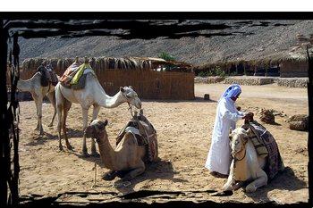 Бедуины Египта