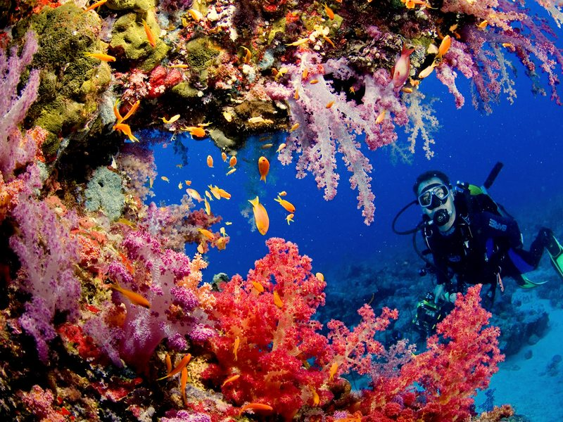 Хургада коралловые острова