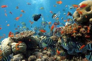 Отели с коралловыми рифами в Хургаде