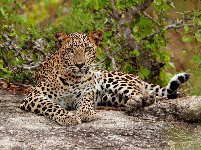 Животные Национального парка Яла