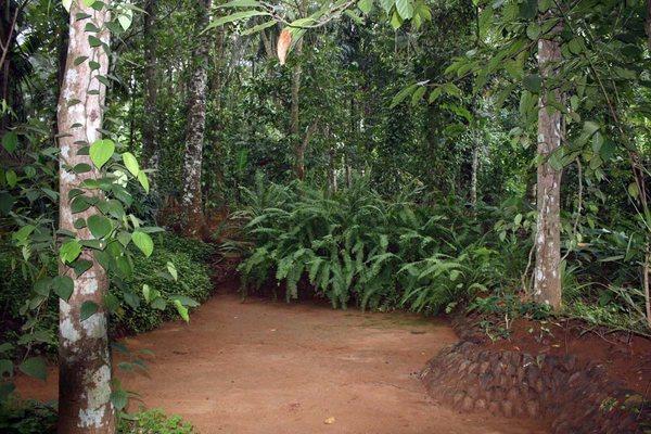 Сады специй в Шри-Ланке