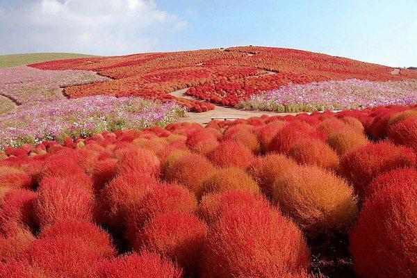 Цветочный парк Хитачи, Япония