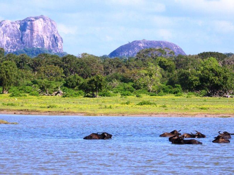 Национальный парк на Шри-Ланке