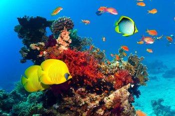 Отели с коралловыми рифами в Египте