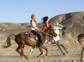 Развлечения в Марса-Алам: конные прогулки